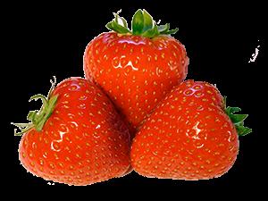 Tempelmayr - Erdbeeren
